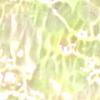 transparent-martele-irise